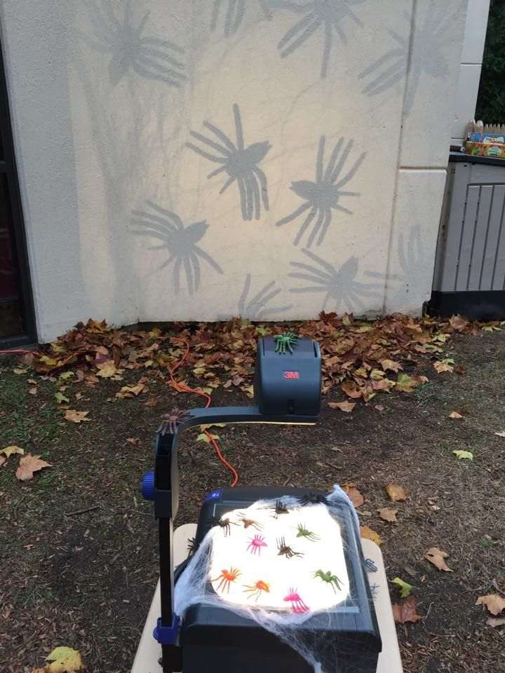 Light and shadow play with spiders on the overhead projector at Natural Learning Community Children's School ≈≈