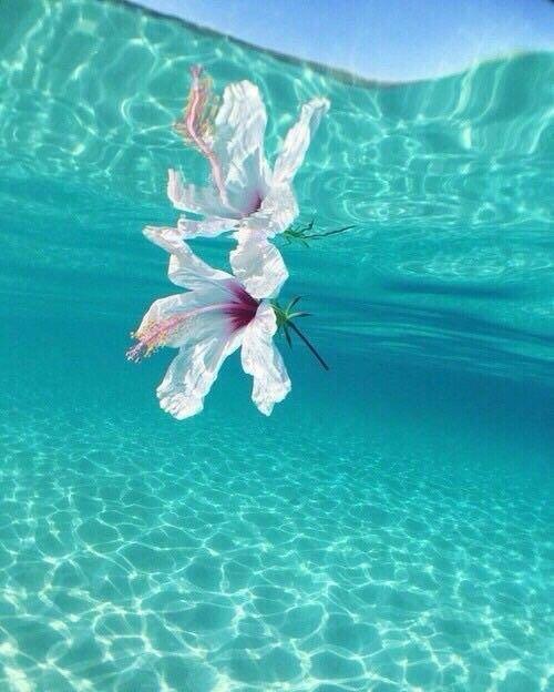 Blume von unter Wasser – Valentin Fabian Münch – #Blume #Fabian #Münch #unter #Valentin