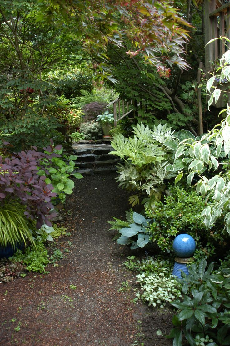 Star of this vignette in part shade: a variegated fatsia japonica (2013)
