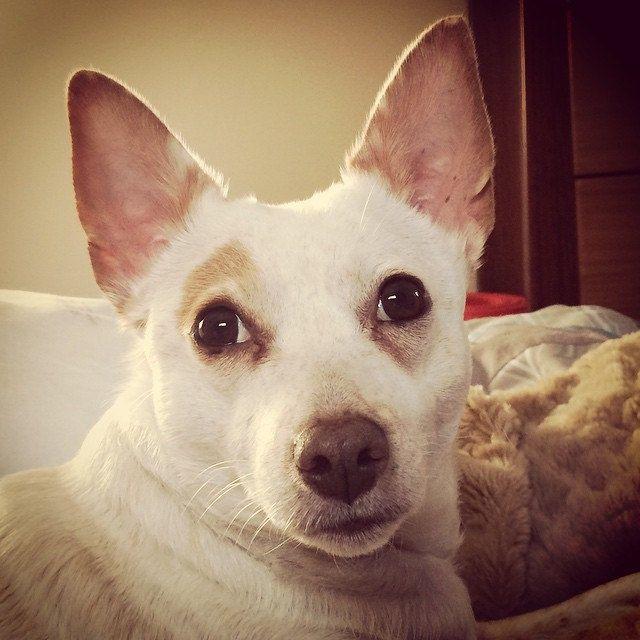 Good Morning <3 #luna #dogsofsydney #dogsofaustralia #dogsofinstagram #dogs_of_instagram | by Jo Lyons Photography