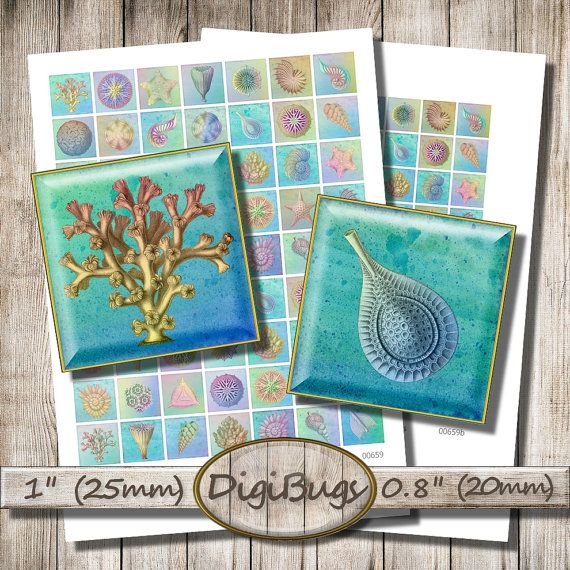 Sea Life, Digital Collage Sheet, 0.8 inch, 1 inch Squares, Sea Star Shell Coral, Printable Nautical Jewelry Images, Instant Download, b1