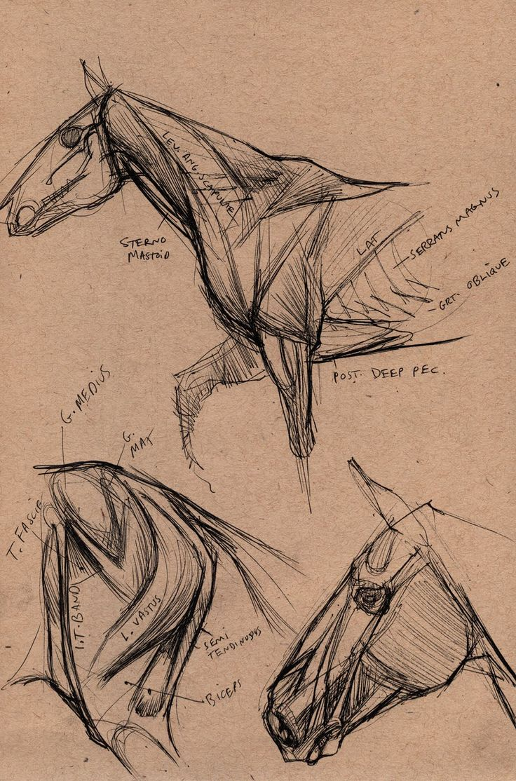 "Concept Design Academy: ""Animal Anatomy"" with Joe Weatherly~!!"