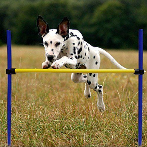Best 25+ Dog Agility Ideas On Pinterest