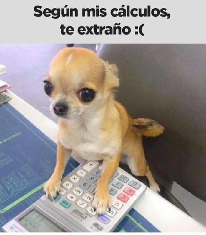 Imagenes De Te Extrano Para Whatsapp Para Descargar Gratis Cachorros Adorables Cachorros Chihuahua Chihuahua Bebe
