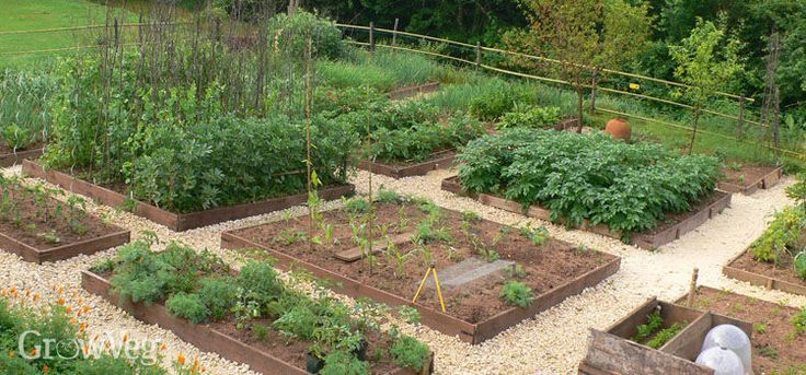 How to Plan a Vegetable Garden: A Step-by-Step Guide - .growveg.com