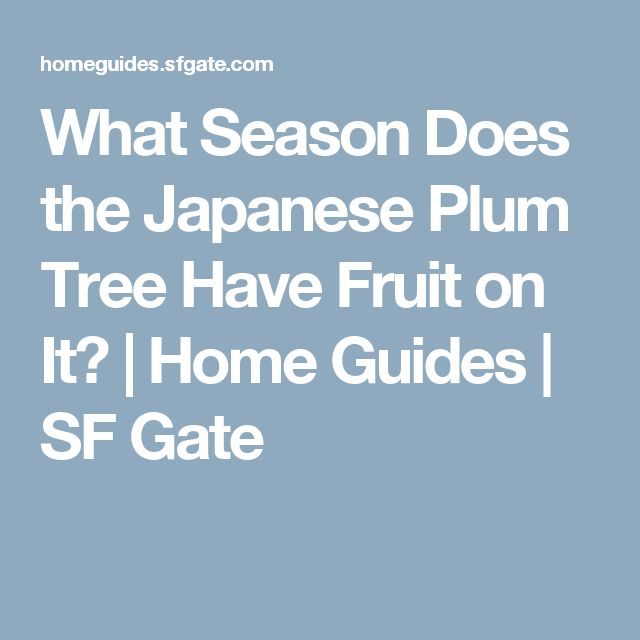 What Season Does the Japanese Plum Tree Have Fruit on It? | Home Guides | SF Gate