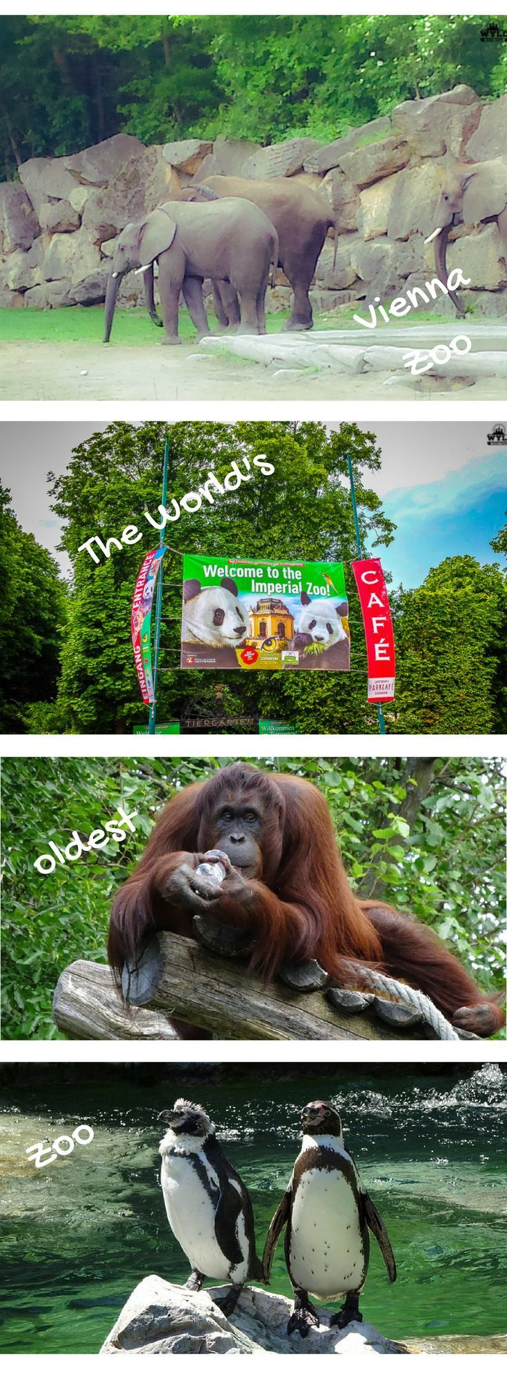 Schonbrunn Zoo, Vienna Zoo, Schonbrunn Palace, Panda Bears, Visiting Vienna, Vienna with kids, Vienna Attractions