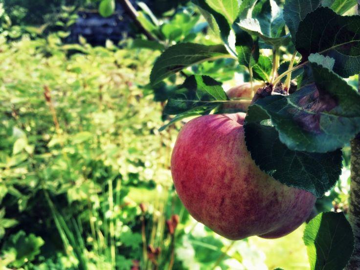 Grønset Gård: Ængelskmainn lager epledessert