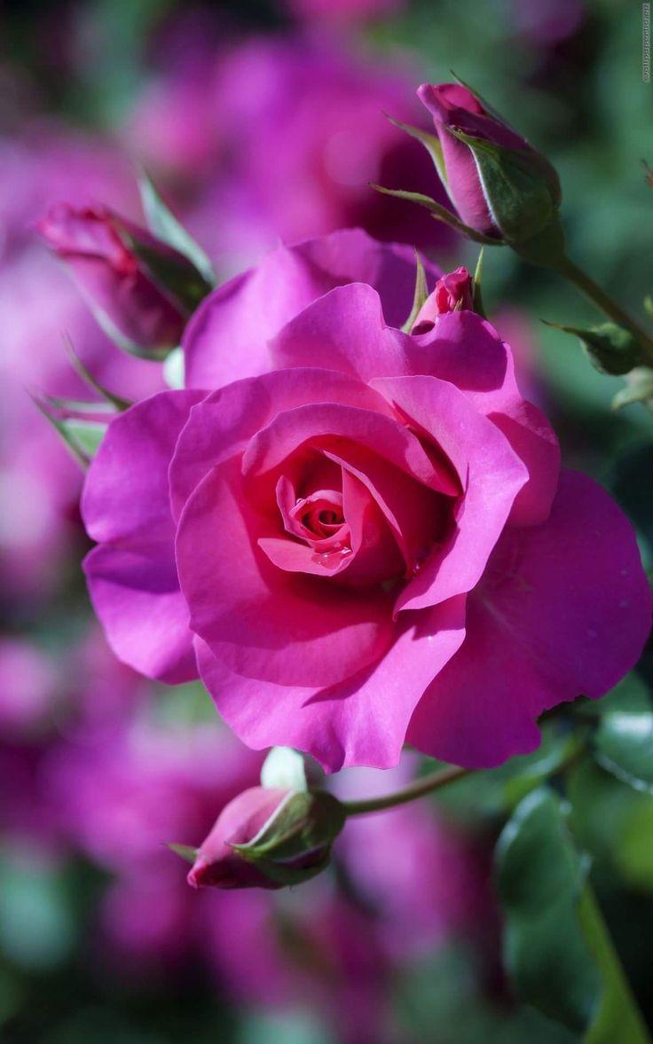 Beautiful flowers : Photo