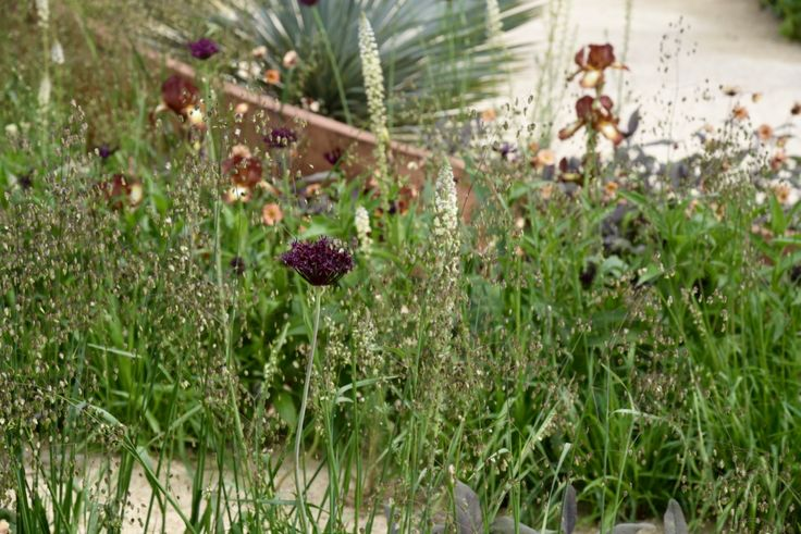 Planting in the Winton Beauty of Mathematics Garden at Chelsea Flower Show 2016
