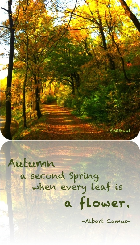 17 Best images about Seasonal Quotes on Pinterest  Summer, Spring and Hanukk...