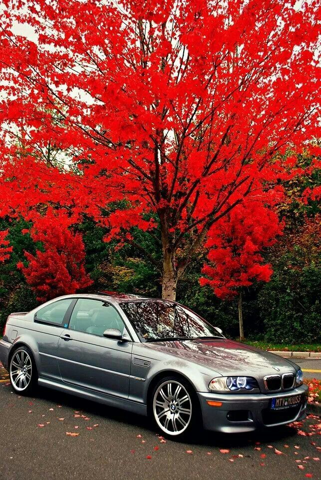 BMW E46 M3 - Awesome photography ✌️                                                                                                                                                                                 More