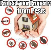Cheap pest control in brisbane CALL NOW: 0404 076 560