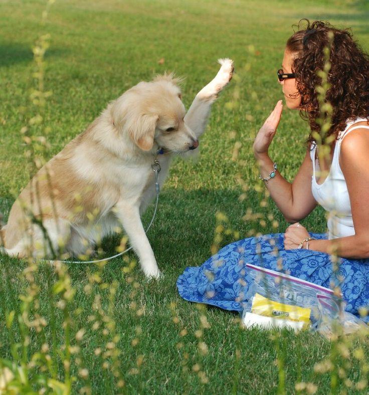 Google Image Result for http://dogwhisperertips.info/wp-content/uploads/2011/08/dog-train-high-five.jpg