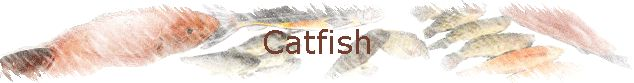 Catfish skin is not edible and is usually removed before cooking. Suited to almost any style of cooking, including pan-frying, baking, oven-...
