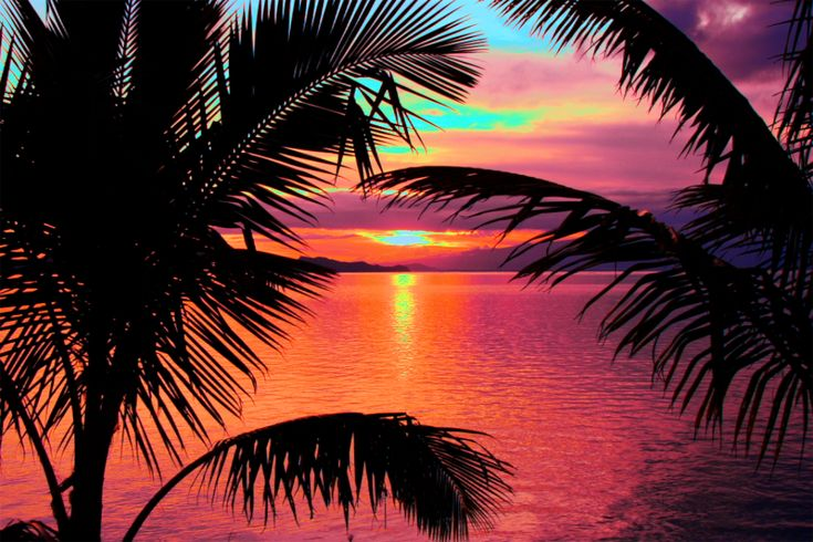 Pics For > Sunset Palm Trees Tumblr | • S u n s e t s ...