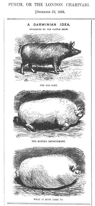 Skewering Darwin in Punch Magazine, 1865