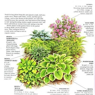 68 best southern shade garden images on Pinterest Shade plants