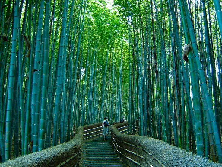 Nel incantevole quartiere di Arashiyama, la zona ovest di Kyoto, si trova