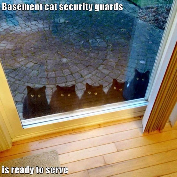 Basement cat security guards is ready to serve http://cheezburger.com/9037339648