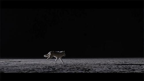 The Kills - Siberian Nights