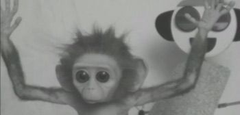 "Aw, what an adorable little monkey. This BAFTA nominated short film titled Monkey Love Experiments is worth a quick watch, telling the story of a tiny monkey named ""Gandhi"" who dreams of traveling into space.   #Dreams #Experiments' #Love #monkey #Short #Space' #Watch"