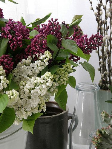 lilacs | by underwater_thing