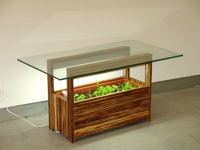 Using Indoor Gardens to Realize Your Greenery Dreams within Your Limited Living Space : Plants In The Bottom Side Of Glass Table