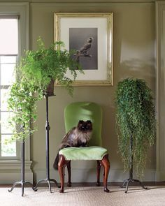 House Plants Decor 23 best houseplants images on pinterest | houseplants, indoor