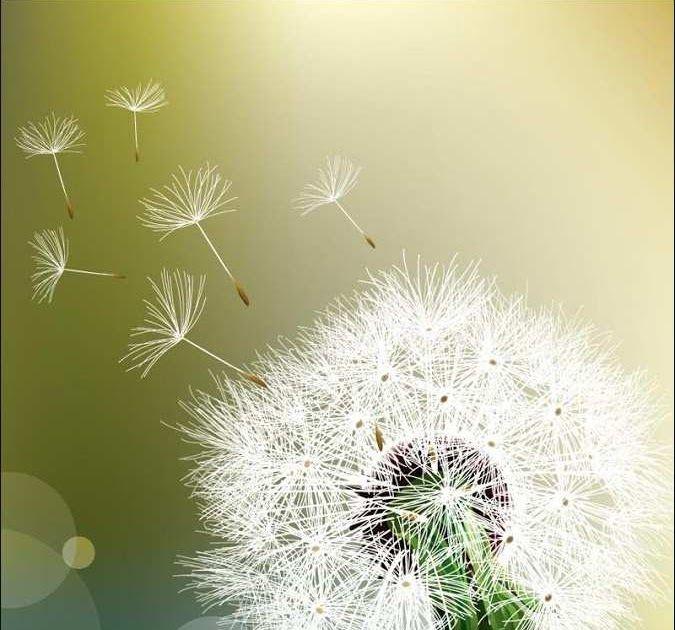Gambar Bunga Dahlia Bergerak Mulai Dari Bentuk Yang Unik Nah Sekian Dulu Gambar Bunga Animasi Bergerak Dari Saya Hari In Di 2020 Bunga Dahlia Bunga Wallpaper Bunga
