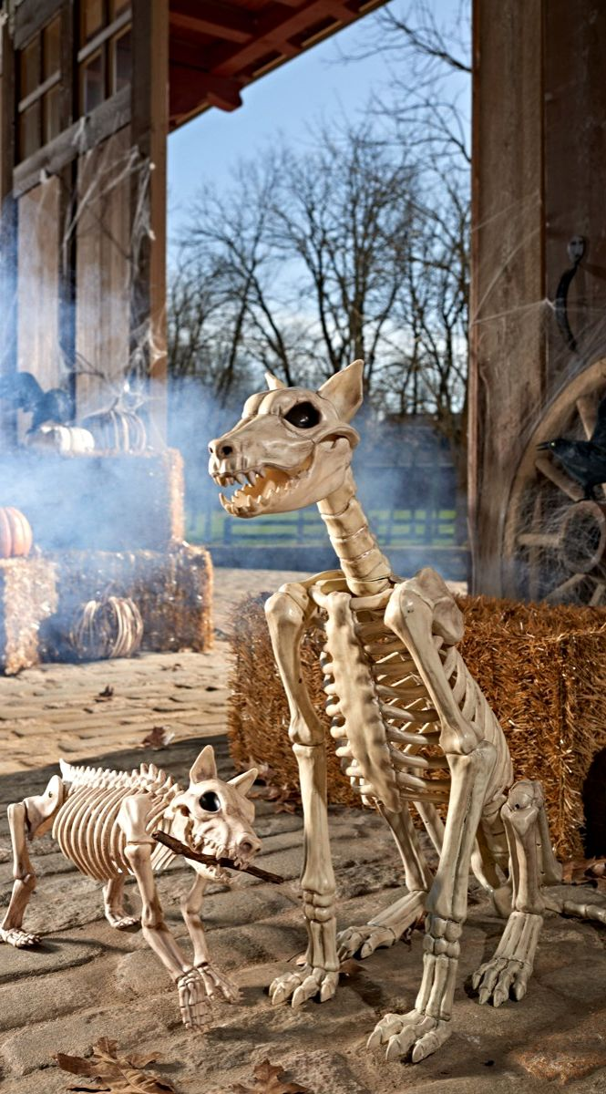 guard your haunted house with the two ferocious looking fidos of our fierce skeleton dog halloween