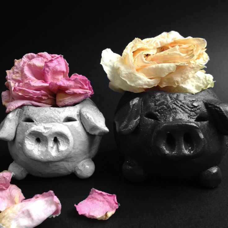 My pigs <3