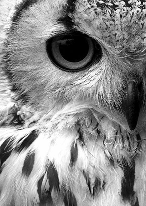 Ansichtkaart gefotografeerde uil in zwart-wit. Fotografie dieren kaart monochrme decoratie foto sfeerbeeld