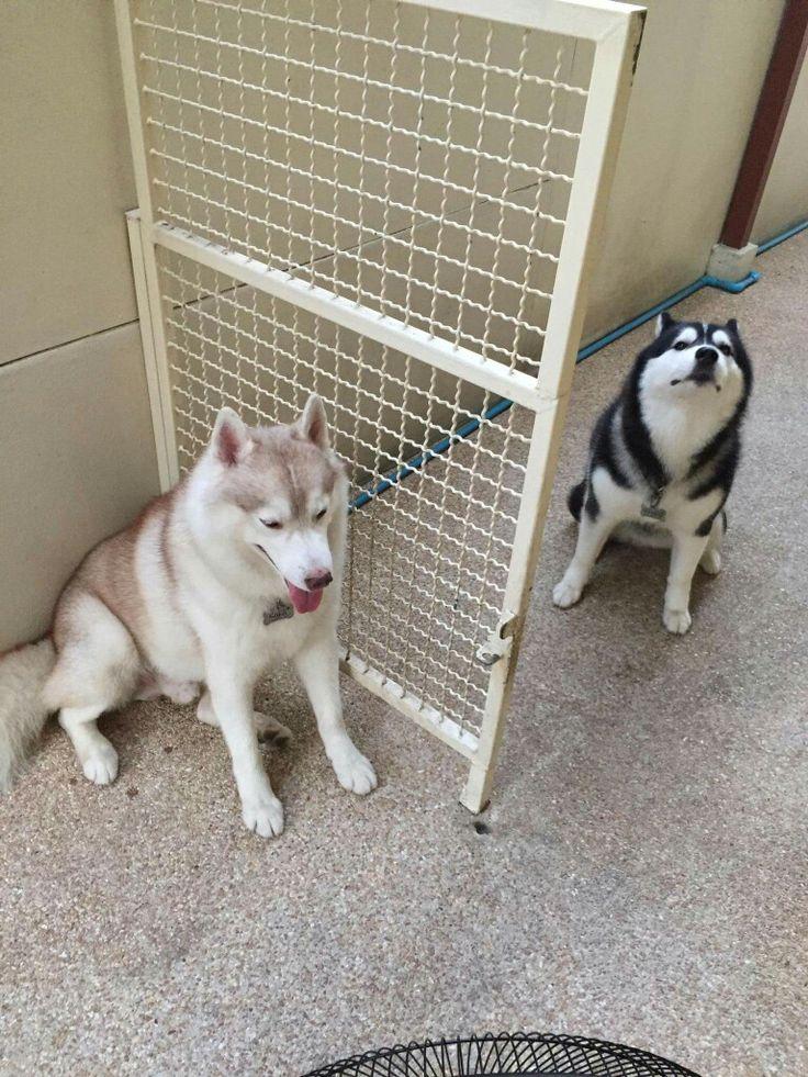 Its us Kaka and Kana