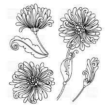 chrysanthemum drawing - Google Search
