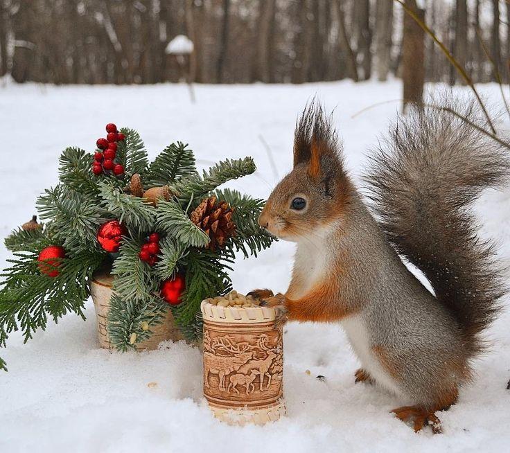 Открытки с добрым утром с детьми и животными зимние, днем