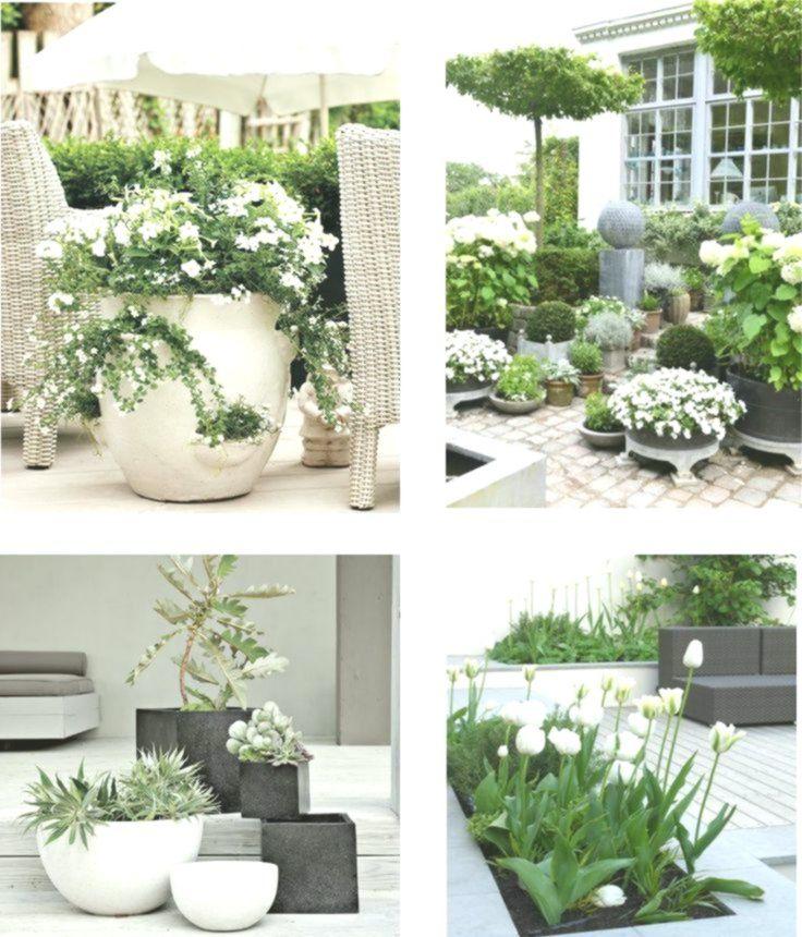 Biale Kwiaty Na Tarasie Balkon I Taras Z Bialymi I Zielonymi Roslinami Biale Balkon Biale Bialymi Garden Inspiration Backyard Landscaping Patio Garden