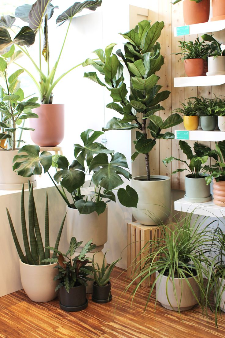Apparently, This Is Best-Selling Plant Attention, San Francisco: NYC's coolest plant store is coming for you. Peek inside The Sill's newest shop (and get some handy greenery recommendations) here. House Plants Decor, Plant Decor, Cactus Flower, Flower Pots, Indoor Garden, Indoor Plants, Mini Plants, Decoration Plante, Plant Aesthetic