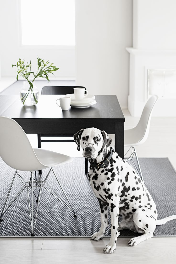 Solina works perfect with pets. Suits to terrace too.