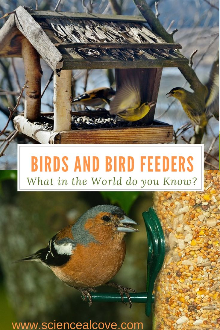 Birds and Bird Feeders- What in the World do you Know? Feeding birds in the winter using feeders in backyards is great. But what do you know about setting up a system for your feathered friends? #feedingbirds #feedingbirdsinwinter #feedingbirdsbackyards #feedingbirdsideas