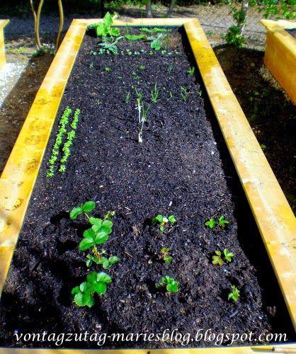 Hochbeet. Erste Bepflanzung im März. Erdbeeren, Spinat.  @vontagzutagmari http://vontagzutag-mariesblog.blogspot.com