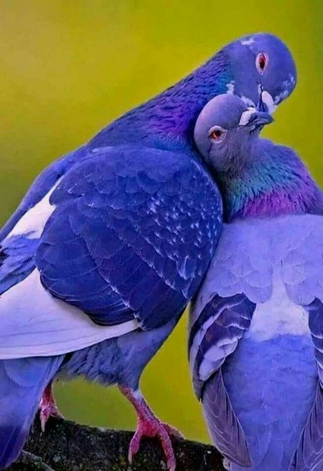 Pin by cherry fashion on images of luxury and abundance | Pinterest | Bird, Pretty birds and Animal
