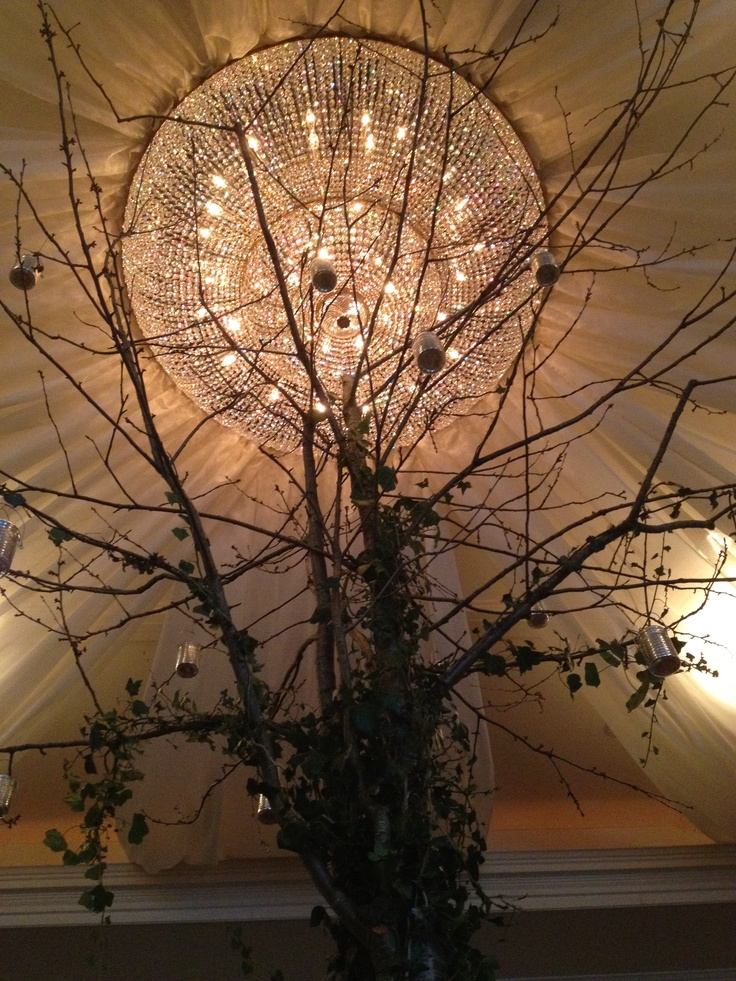 Trees inside foyer of hotel, with cream voile used to tent the ceiling