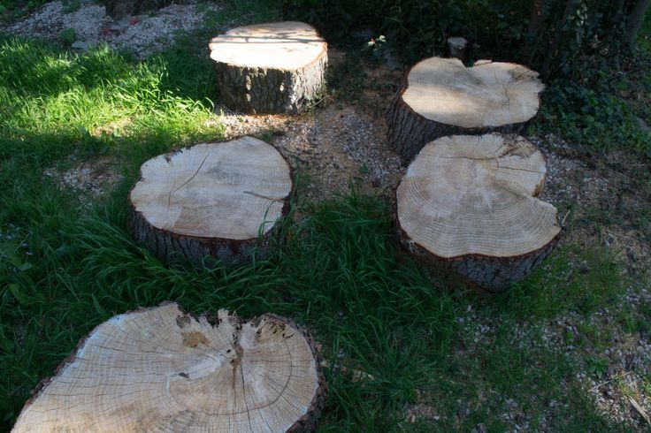 #Treetrunks #circle  Different way of cutting , A la francè . Avignonese. France, March . 2015