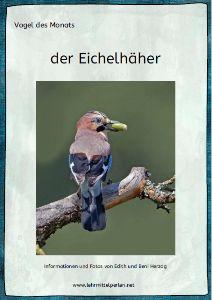 Vogel des Monats: der Eichelhäher