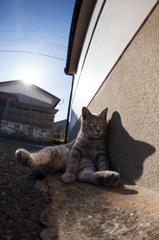 f:id:fubirai:20121128225333j:image