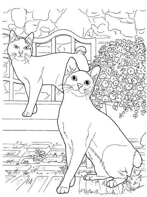 the japanese bobtail has an unusual bobbed tail more closely resembling the tail of