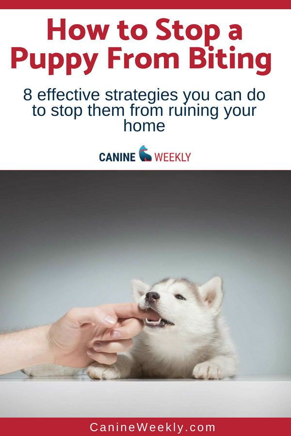 biting puppy a complete guide to stopping puppies biting - 600×900