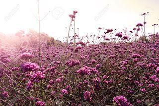 Flor e Poesia: As flores se entrelaçam nos campos E se misturam c...