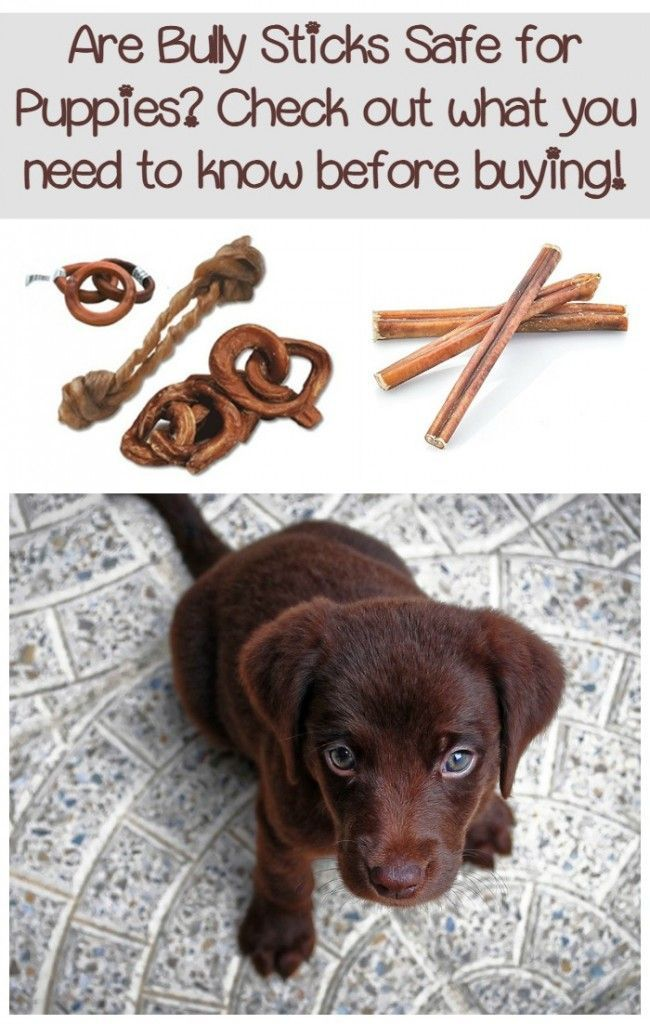 Are bully sticks safe for puppies? What are the best types to buy? Check out everything you need to know about bully sticks for safe chewing in puppies!